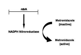 bacteria01fig02.jpg