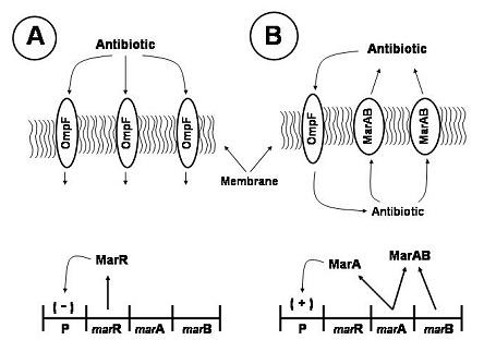 bacteria01fig03.jpg