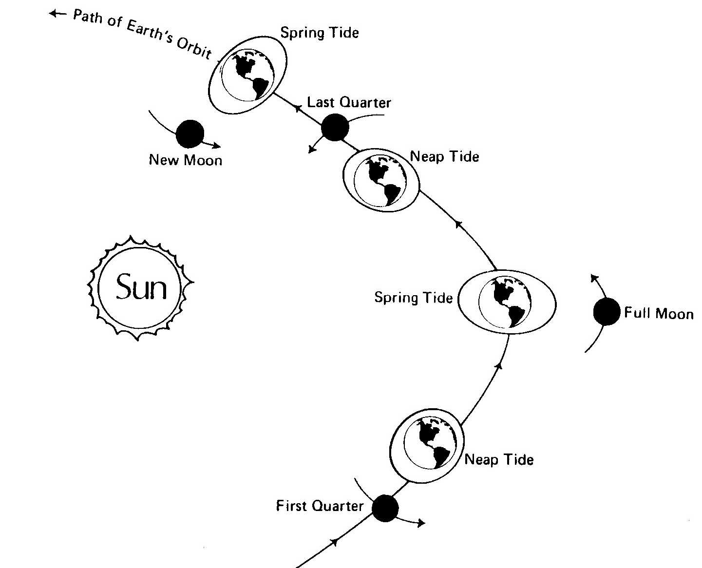 Relationship of the moon's orbit to the tides